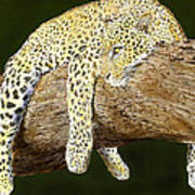 Leopard At Rest Poster by Yvonne Scott