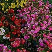 les fleurs II Poster