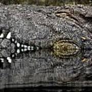 Let Sleeping Crocs Lie Poster
