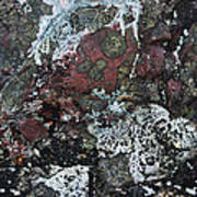 Lichen Abstract II Poster