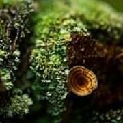Lichen And Fungi 1 Poster