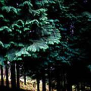 Light Forest Poster