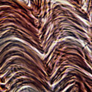 Light Micrograph Of Smooth Muscle Tissue Poster