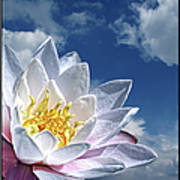 Lily Flower Against Sky Poster