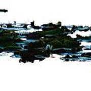 Lily Pads On White Water Poster