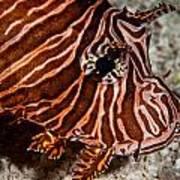 Lionfish Portrait Poster