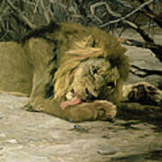 Lion Reclining In A Landscape Poster