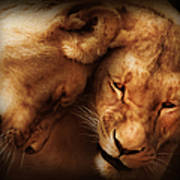 Lioness Love Poster