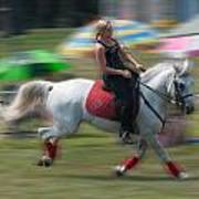Lipizzaner At A Gallop Poster