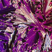 Liquid Crystalline Dna Poster