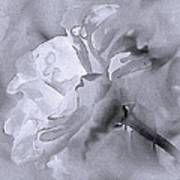 Liquid Rose Poster