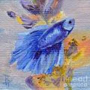 Little Blue Betta Fish Poster