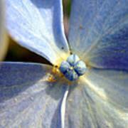 Little Blue Flower Poster