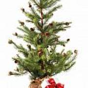 Little Christmas Tree With Red Ribboned Gifts On White  Poster by Sandra Cunningham