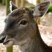 Little Deer Poster by Karen Grist