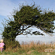 Little Girl And Wind-blown Tree Poster