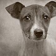Little Jack Monochrome Poster by Pat Abbott