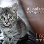 Little Kitten Greeting Card Poster by Micah May