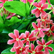 Little Pink Flowers Poster