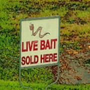 Live Bait Sign Poster