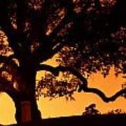 Live Oak- Cemetery- Natchez Mississippi Poster