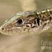 Lizard Portrait Poster