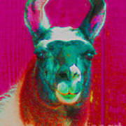 Llama Of A Different Color Poster