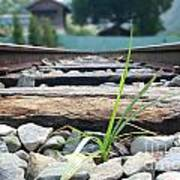 Lone Blade Of Grass On Railtracks Poster