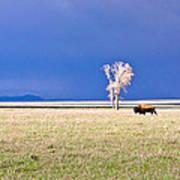 Lone Buffalo 3 Poster