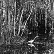 Lone Egret Black And White Poster