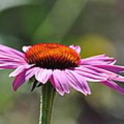 Lone Flower Poster