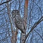 Lone Gray Owl Poster