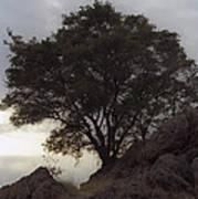 Lone Oak 2 Poster