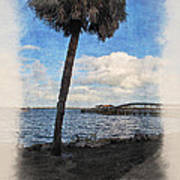 Lone Palm Tree Poster