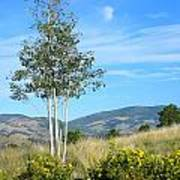 Lone Tree Colorado Poster