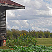 Louisiana Cane Poster