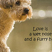 Love Is A Wet Nose And A Furry Hug Poster