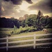 Love This Photo Of A #horse On A #hill Poster by Pete Michaud