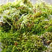 Lovely Green Lichen Poster