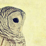 Lovely Lucy Barred Owl Poster