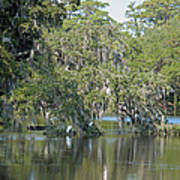 Lowcountry Landscape Poster