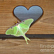 Luna Moth In Love Poster
