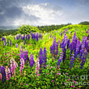 Lupin Flowers In Newfoundland Poster by Elena Elisseeva