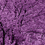 Lush Lavender Poster
