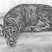 Lying Low - Doberman Pinscher Dog Art Print Poster