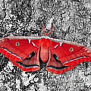 Madam Moth - Red White And Black Poster