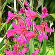 Magenta Flowers Poster