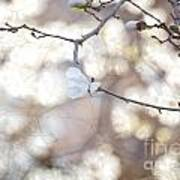 Magnolia Dream Poster