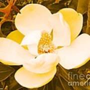 Magnolia In Color Poster by Lorraine Louwerse