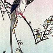 Magpie, 19th Century Poster